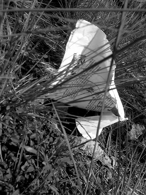 Intrusos: SEM NOME (2009)